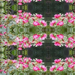 seattle flowers 2
