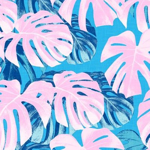 Monstera deliciosa  - Swiss cheese plant - pink and blue - LAD19