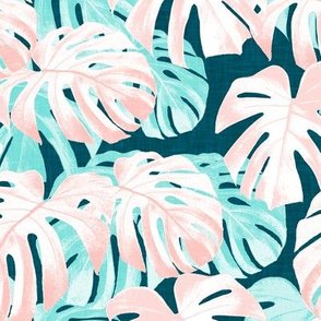Monstera deliciosa  - Swiss cheese plant - pink and teal - LAD19