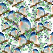Bluebirds Galore