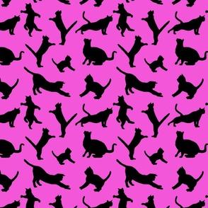 kitties warm-up black on pink 8x8