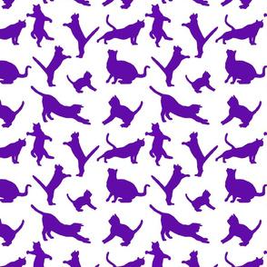 kitties warm-up violet  8x8
