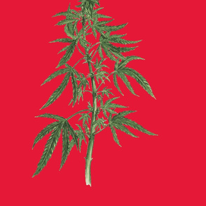 Botanical Cannabis - Christmas Edition