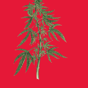 Botanical Cannabis - Christmas Edition-ed