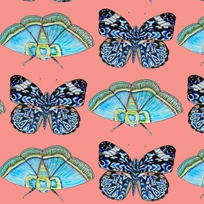 blue butterfly watercolor on coral