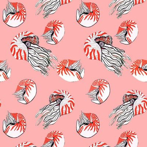 Nautilus coral on blush pink