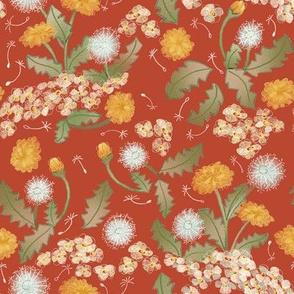 Dandelion Coral