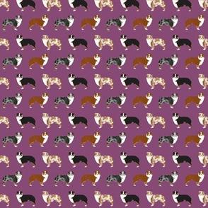 australian shepherd (Tiny) dogs cute pet dog aussie dogs red merle blue merle best dog fabric cute dogs best aussie dog fabrics sweet pet dog fabric