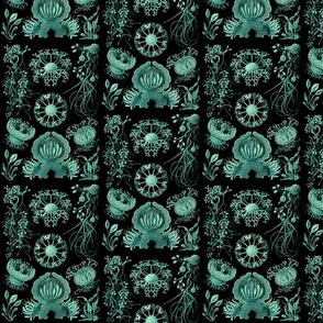 Ernst Haeckel Ascomycetes Sac Fungi