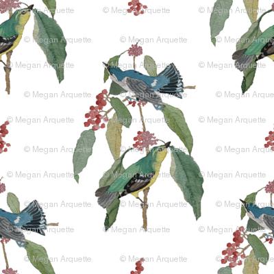 Birds_preview