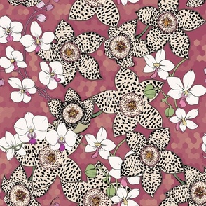 stapelia flowers