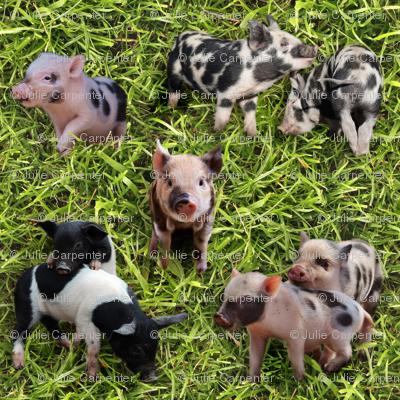 Piggy-fabric_preview