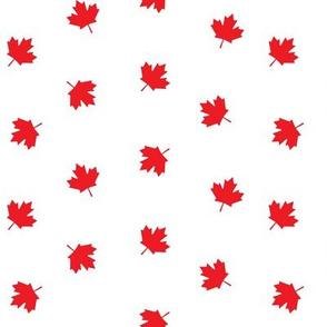 Maple leaves -  LAD19