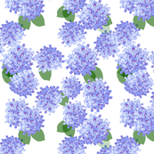 hydrangea paper purple