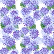 hydrangea paper watercolor purple