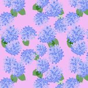hydrangea paper pink