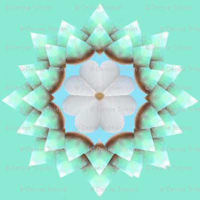 White Pearl Daisy on Seafoam Green