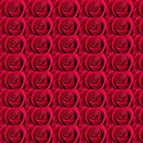 rose-4087940__340