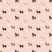 Saeldarlifs Icelandic Sheepdogs - Peach