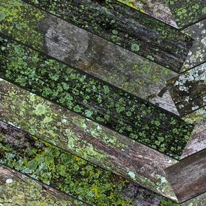 Mossy Weathered Wood in Chevron