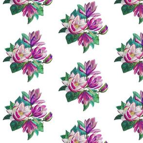 Purple flower magnolia