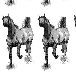 Arabian horses-Centered