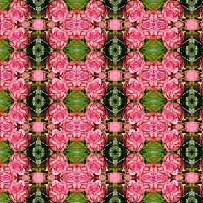 rose-4089751__340