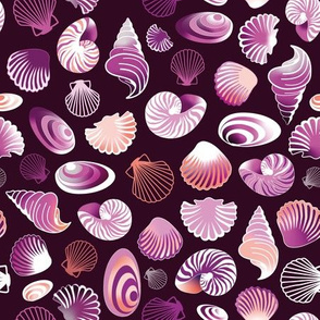 violet sea shells
