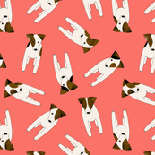 Jack Russell Terriers pattern coral