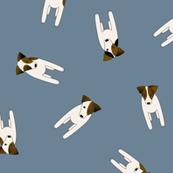 JRT PRT tiny terriers slate blue