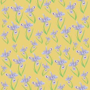Wild Iris Lace - mustard