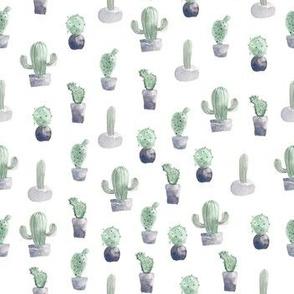 Watercolor Cactus Charcoal Potplants