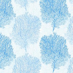 Fan Corals (azure)
