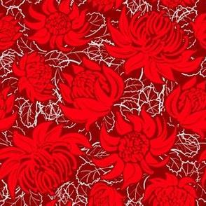 Waratah flowers on dark red background