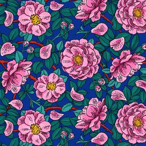 Pink wild roses on blue background