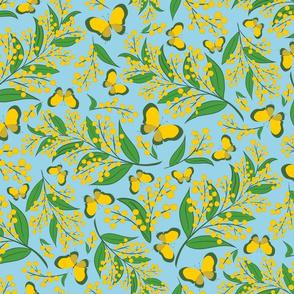 Golden Wattle (on blue)