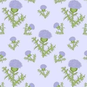 Prickly Scotch Thistle Small Print