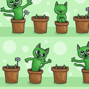 Growing cat plants - green