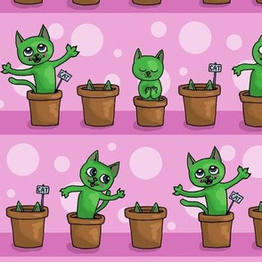 Growing cat plants - pink purple
