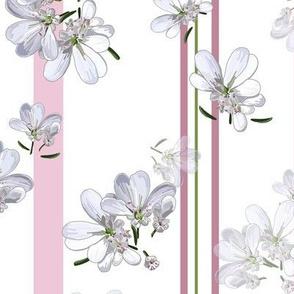 White Coriander Flowers + Pink Stripes