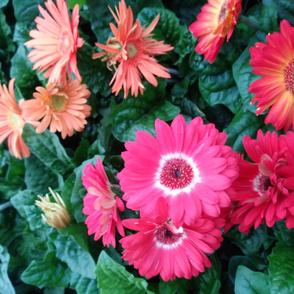 Dizzy flowers