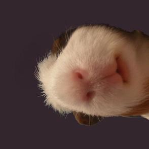 Piggie in a Blanket