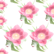 Tulips Symmetrical Overexposed