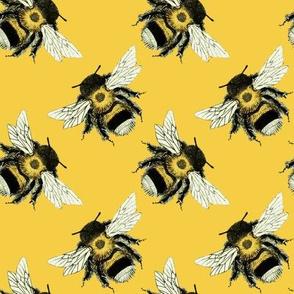 Bumble Bee Basics: Yellow