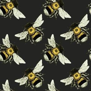 Bumble Bee Basics: Black