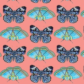 indigo blue butterfly coral