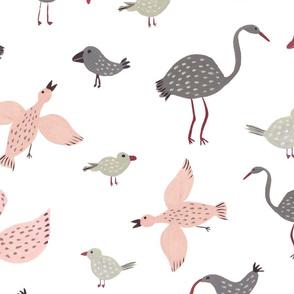 Delicate birds