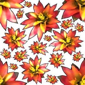 Bromeliad Flower Stroke