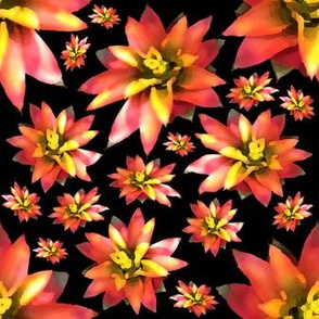 Painterly Bromelaid Flower Black