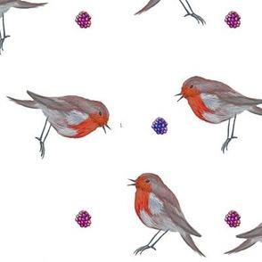 watercolor robin and blackberries